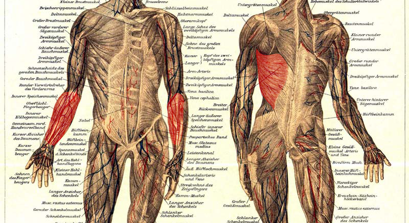 Beanspruchte Muskeln beim Klettern – target10a.com